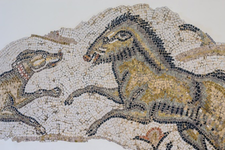 Old Mosaic dog with will boar photo