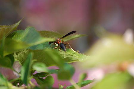 葉の上に座っているスズメバチ
