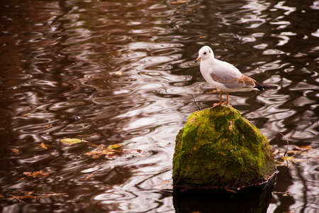 seagull at the lake in autumn photo