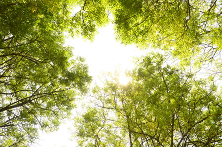 penetrate: sun ray penetrate leaves