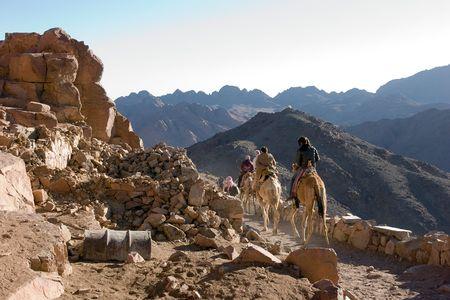 monte sinai: Personas montar los camellos en el monte Sina� camino