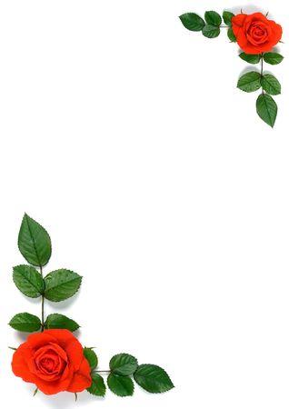 flores en esquina: Papel con rosas y hojas en dos esquinas