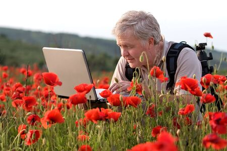Photographer searching on laptop in poppy field Stock Photo
