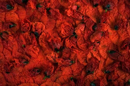 Red poppy petals and buds settle on a plate