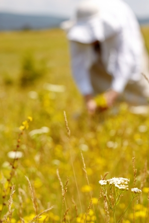 Woman picking curative herbs in a meadow photo
