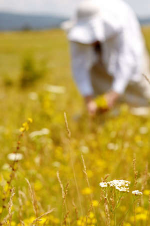 curative: Woman picking curative herbs in a meadow Stock Photo