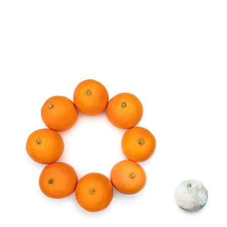 Moldy orange out of the circle of the good ones. Concept for the bad ones out of the good ones.