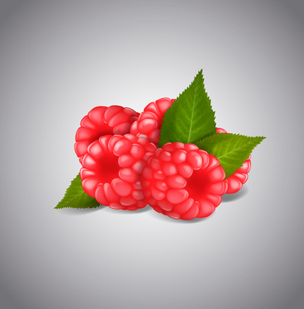 Ripe Raspberry fruits isolated on white background. Vector green leaves and berries.