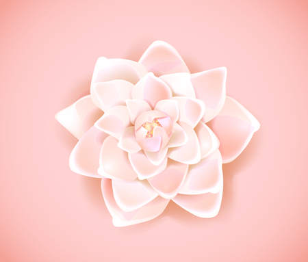 Blossoming pink flower isolated in background. Spring Rose, camellia flower.
