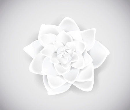 Blossoming white flower isolated in background. Spring Rose, camellia flower.