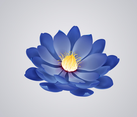 Blossoming beautiful blue waterlily or lotus flower isolated.
