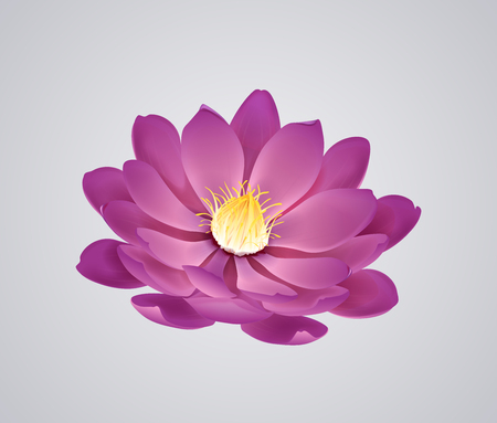 Blossoming beautiful pink waterlily or lotus flower isolated.