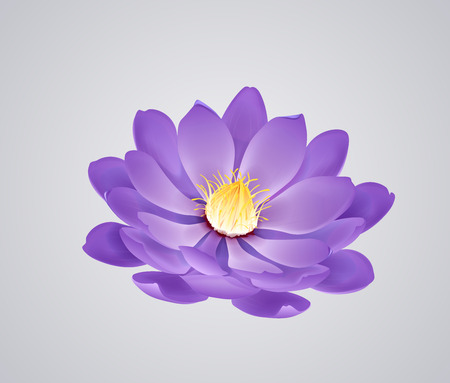 Blossoming beautiful purple waterlily or lotus flower isolated. Illustration