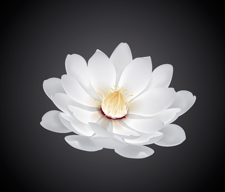 Blossoming beautiful white waterlily or lotus flower isolated. Stock Illustratie