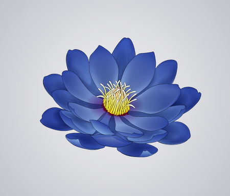 Blossoming beautiful blue waterlily or lotus flower draw isolated.