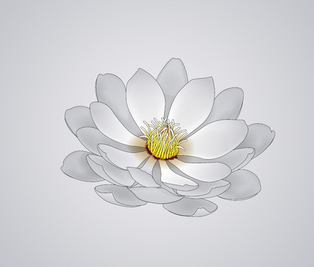 Blossoming beautiful white waterlily or lotus flower draw isolated.
