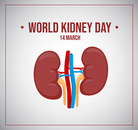 World kidneys day. Vector illustration. Healthy kidney.