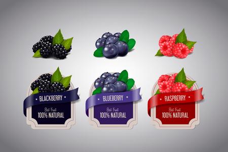 Etiquetas de bayas realistas con frutos de mora, arándano y frambuesa aislados. Plantilla de diseño de etiqueta de mermelada de baya.