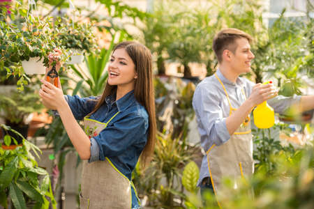 florists: Two young handsome florists working in greenhouse. Stock Photo