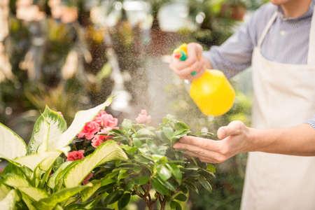 Mannelijke bloemist spuiten bloemen in de bloemenwinkel. Stockfoto