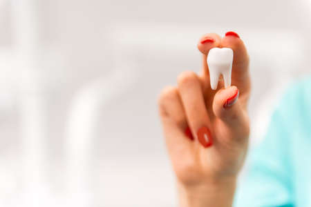 stomatologist: Closeup of dentist hand holding a model tooth