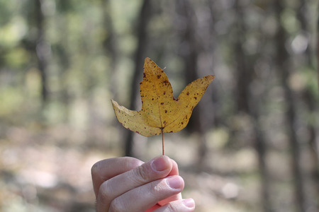 A man's hand holding a dead autumn leaf against a blurred background. Archivio Fotografico