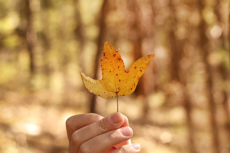 A mans hand holding a dead autumn leaf against a blurred background.