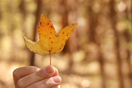 A man's hand holding an autumn leaf against a blurred background.