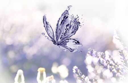 A water butterfly flying over a dreamy lavender flowers.