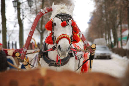 horse sleigh: A white horse with carved black harness and red pompons, a close-up