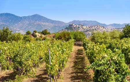 vineyard on the Mount Etna and Castiglione of Sicily on background, sicily, italy