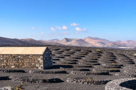 Geria vineyard on volcanic soil, Lanzarote, Canary islands, Spain