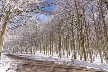 winter landscape with snow, mount Amiata, tuscany, Italy