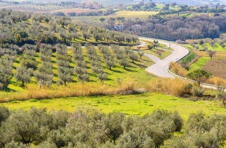 landscape near Magliano in Tuscany, tuscany, Italy