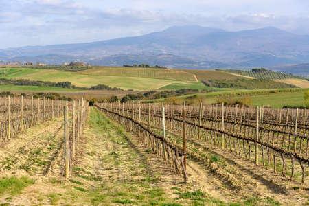 landscape with vineyard near Montalcino, Tuscany, Italy Stock Photo