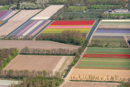 flower field in the region of Noordwijkerhout, aerial view, Netherlands