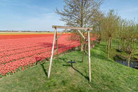wooden swing in the garden near tulip cultivation, Netherlands
