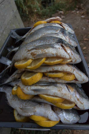 fishery products: Plate with raw silver sea bream fish