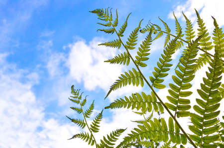 Green fern leaves on a background of sky and clouds photo