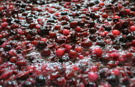 The process of fermentation the pulp from berries for cooking wine Stock Photo