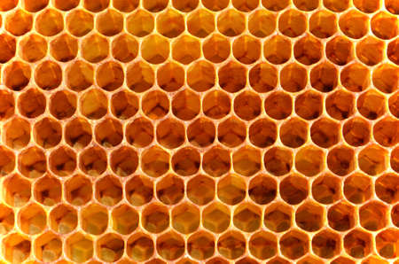 Background from bee wax honeycombs