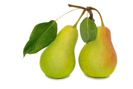 Two ripe large yellow pears. Presented on a white . photo