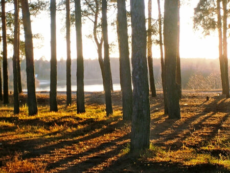 Landscape: Oseni forest at sunset, away see the river. photo