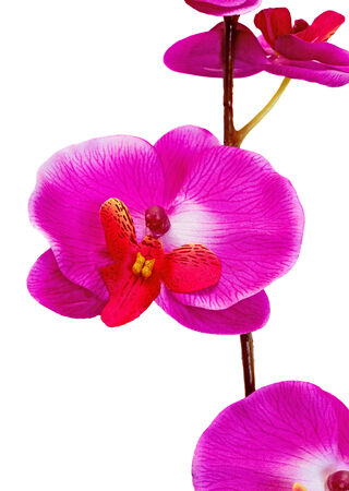 Beautiful artificial flower orchid hot pink on a white background beautiful artificial flower orchid hot pink on a white background stock photo 35217240 mightylinksfo
