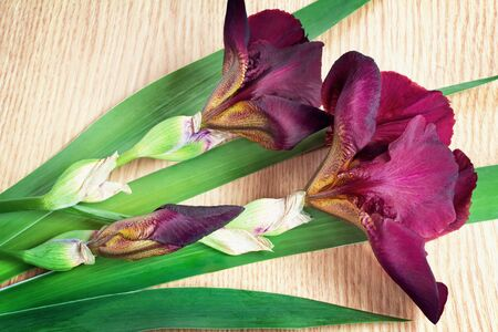 claret: On the surface of the table are two large beautiful iris flower with a beautiful purple color with green leaves. Stock Photo