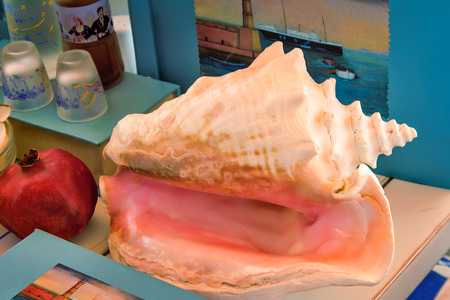 the next life: Still life: the table is a large beautiful white-pink sea shell, next to her are books, grenades, and other items.