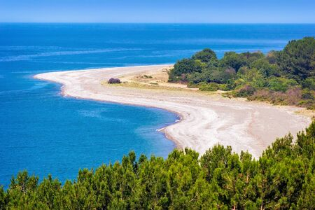 pine trees: Beautiful landscape: blue sea, beach, shore with growing pine trees. The view from the top.