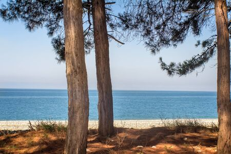 pino: Beautiful scenery: blue sea, beach, shore with pine trees growing. Pitsunda, Abkhazia. Foto de archivo