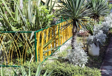 subtropical: On a plot near the house for decorative landscaping planted palm trees and other subtropical plants. Stock Photo