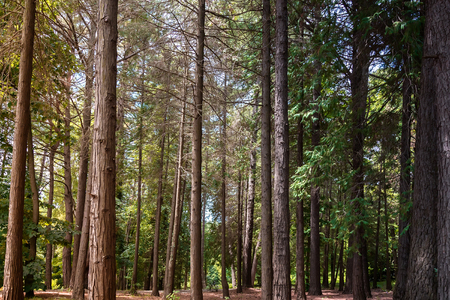 hardwoods: Part of the arboretum with many beautiful trees of pine and hardwoods.